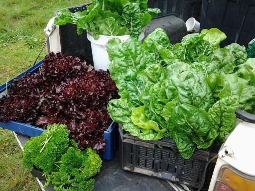 Backyard veggie farmers